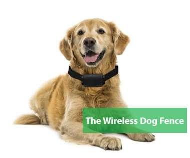 Best Wireless Dog Fence
